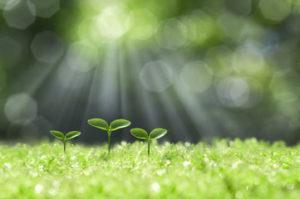 afbeelding groeiende plantjes